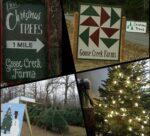 Goose Creek Farm's Christmas Trees
